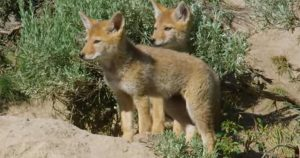 Nature up close: Springtime in Yellowstone
